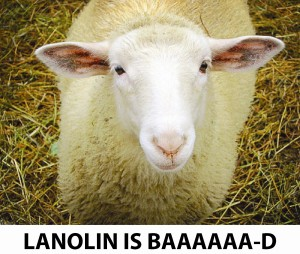 sheep-lanolin
